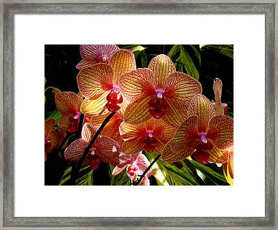 Framed Print featuring the photograph Butterfly Orchids by Rodney Lee Williams