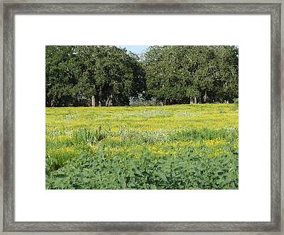 Framed Print featuring the photograph Butterfly Paradise by John Glass