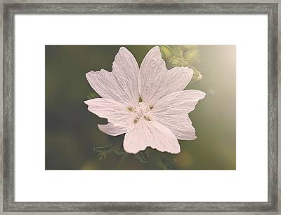 Butterfly Petals Framed Print by Faith Simbeck