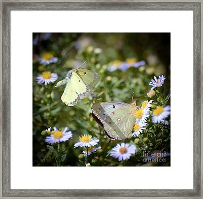 Framed Print featuring the photograph Butterfly Moments  by Kerri Farley