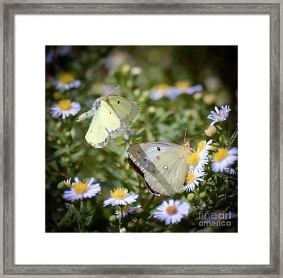 Butterfly Moments  Framed Print by Kerri Farley