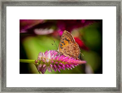 Butterfly Pink Sparkle  Framed Print by Isabel Laurent