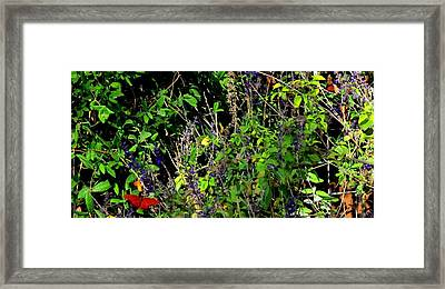 Framed Print featuring the photograph Butterfly Power by David  Norman