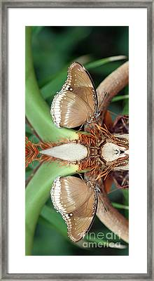 Butterfly Reflection Framed Print by Karen Adams