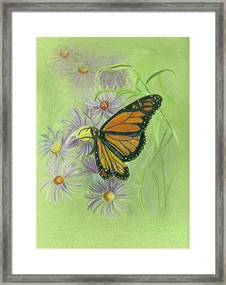 Butterfly Framed Print by Ruth Seal