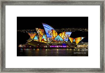 Butterfly Sails Framed Print by Bryan Freeman