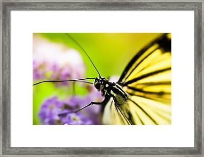 Butterfly Framed Print by Sebastian Musial