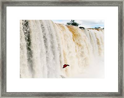 Framed Print featuring the photograph Butterfly by Silvia Bruno