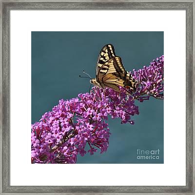 Butterfly Framed Print by Simona Ghidini