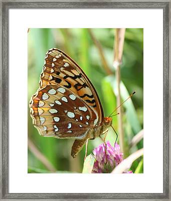 Butterfly Sipping  Framed Print by Neal Eslinger