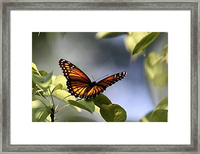 Butterfly -  Soaking Up The Sun Framed Print