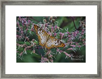 Framed Print featuring the photograph Butterfly Soft Landing by Thomas Woolworth