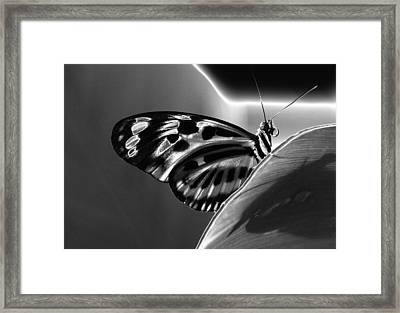 Butterfly Solarized Framed Print