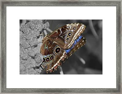 Butterfly Spot Color 1 Framed Print by Bob Slitzan
