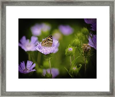 Butterfly Spotlight Framed Print