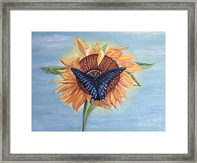 Butterfly Sunday In The Summer Framed Print