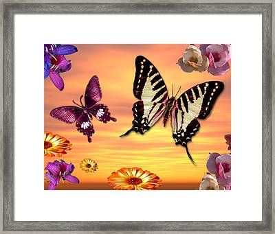 Butterfly Sunset Framed Print by Alixandra Mullins
