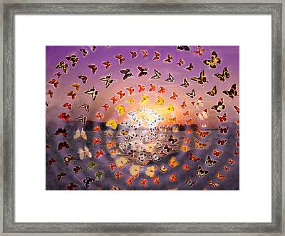 Butterfly Sunset Framed Print
