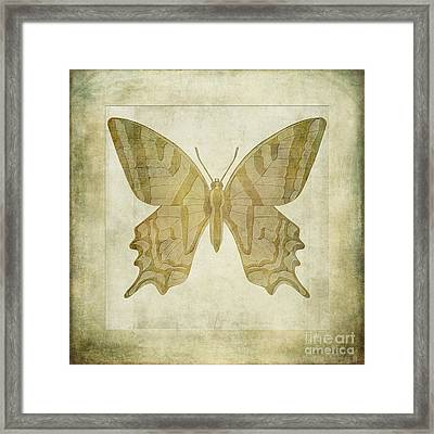 Butterfly Textures Framed Print by John Edwards