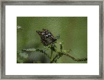 Butterfly The Extruded Photograph Framed Print by Suneet Bhardwaj