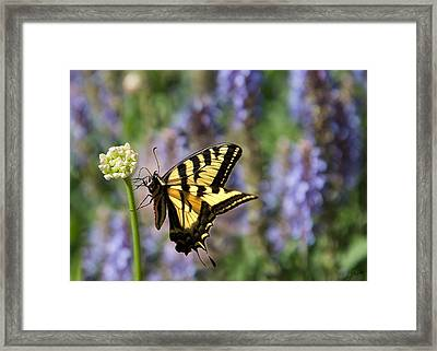 Butterfly Thoughts Framed Print
