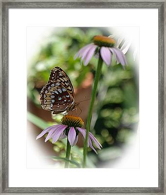 Butterfly Time Framed Print by Karen McKenzie McAdoo