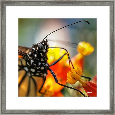 Butterfly Tongue Squared Framed Print by TK Goforth