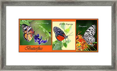Butterfly Triptych Framed Print