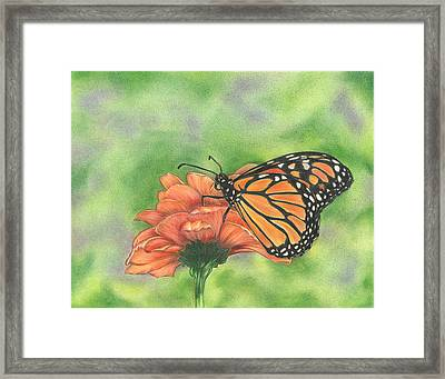 Butterfly Framed Print by Troy Levesque