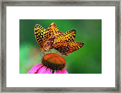 Framed Print featuring the photograph Butterfly Twins by Christina Rollo