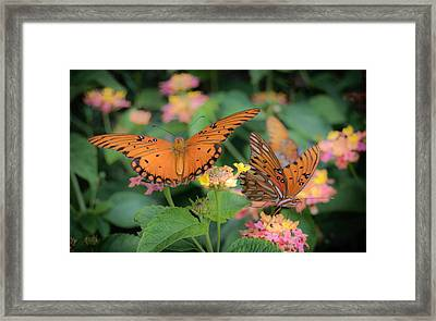 Butterfly Twins Framed Print by James Barber