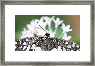 Butterfly View Framed Print