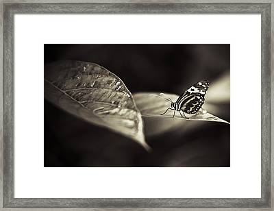 Butterfly Warm Tone Framed Print by Bradley R Youngberg