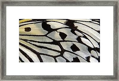 Butterfly Wing Framed Print by Jocelyn Kahawai
