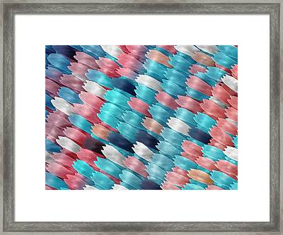 Butterfly Wing Scales Framed Print by Alex Hyde