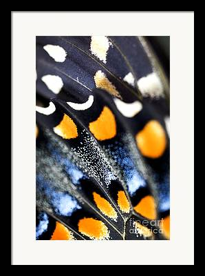 Low Wing Photographs Framed Prints