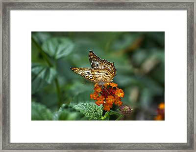 Framed Print featuring the photograph Butterfly Wings Of Sun Light by Thomas Woolworth