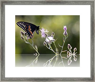 Framed Print featuring the photograph Butterfly With Reflection by Eleanor Abramson