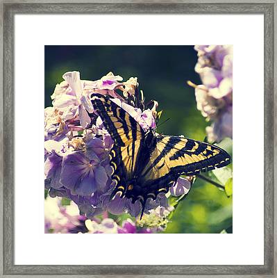Framed Print featuring the photograph Butterfly by Yulia Kazansky