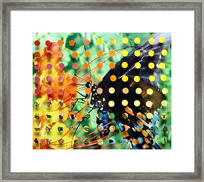 Butterfly2 Framed Print by Irmari Nacht