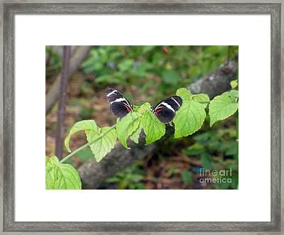 Butterfly2 Framed Print