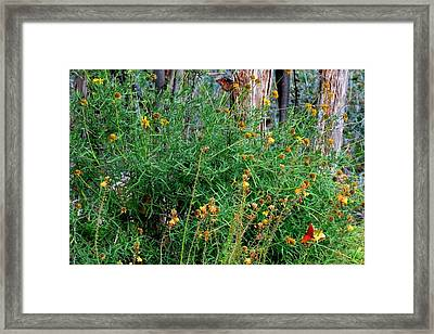 Framed Print featuring the photograph Butterflymagic by David  Norman