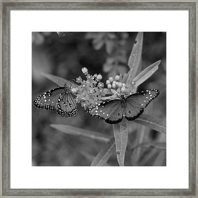 Framed Print featuring the photograph Butterflys by Joseph G Holland