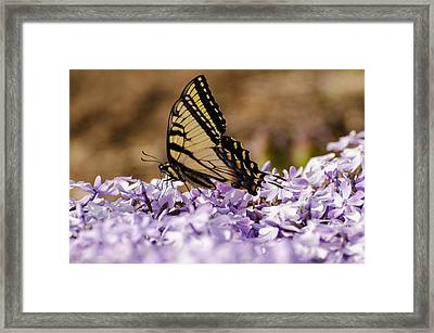 Butterfy On Flowers Framed Print