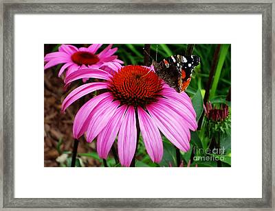 Butterly On Flower Framed Print by Claudette Bujold-Poirier