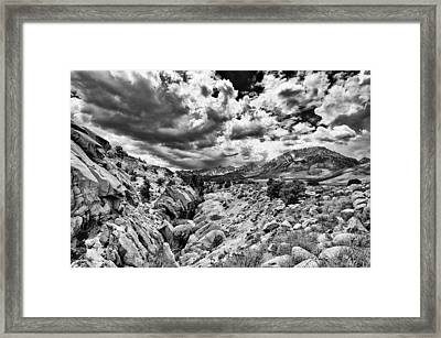 Buttermilks Framed Print by Cat Connor