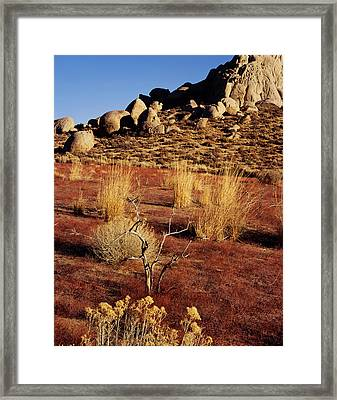 Buttermilks - Red Brush Framed Print