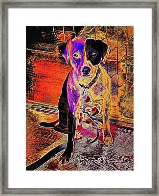 Butterscotch Buddy Framed Print by Robert McCubbin