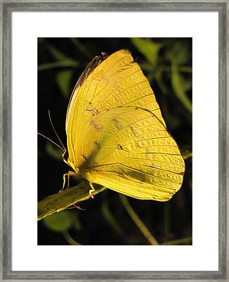 Butterscotch Framed Print by Jennifer Wheatley Wolf