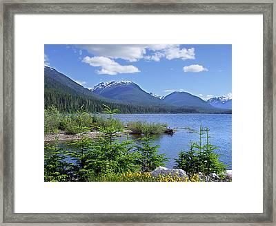Buttle Lake Framed Print